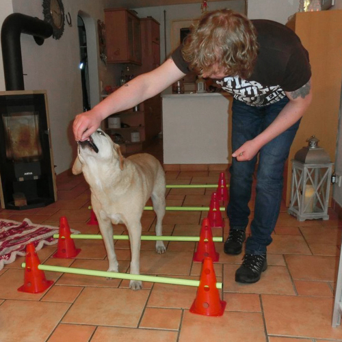 Aktive Hundephysiotherapie Canine E Motion