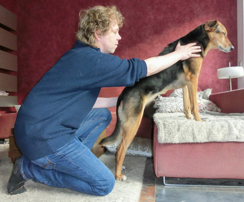 Thomas Dörries bei der Hundephysiotherapie