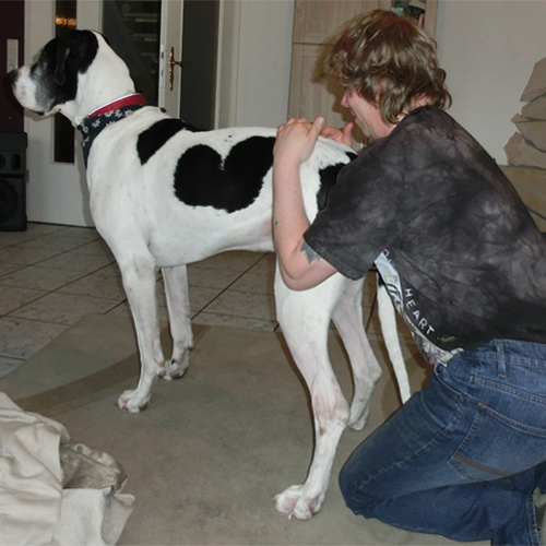 Hundephysiotherapie Hannover und Umgebung